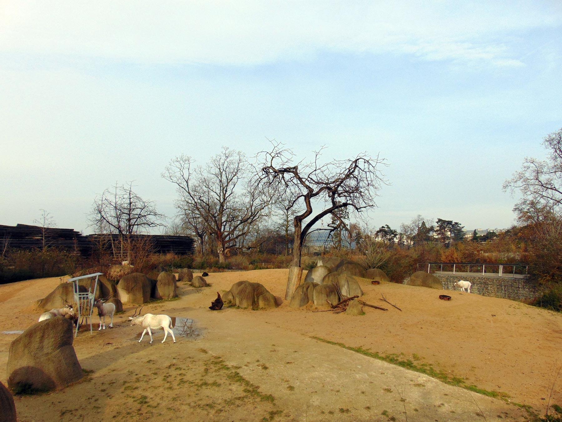 просторные загоны зоопарка