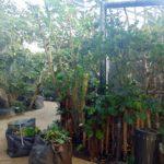 павильон в зоопарке