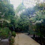 тропический павильон в зоопарке