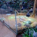 черепахи в парижском зоопарке