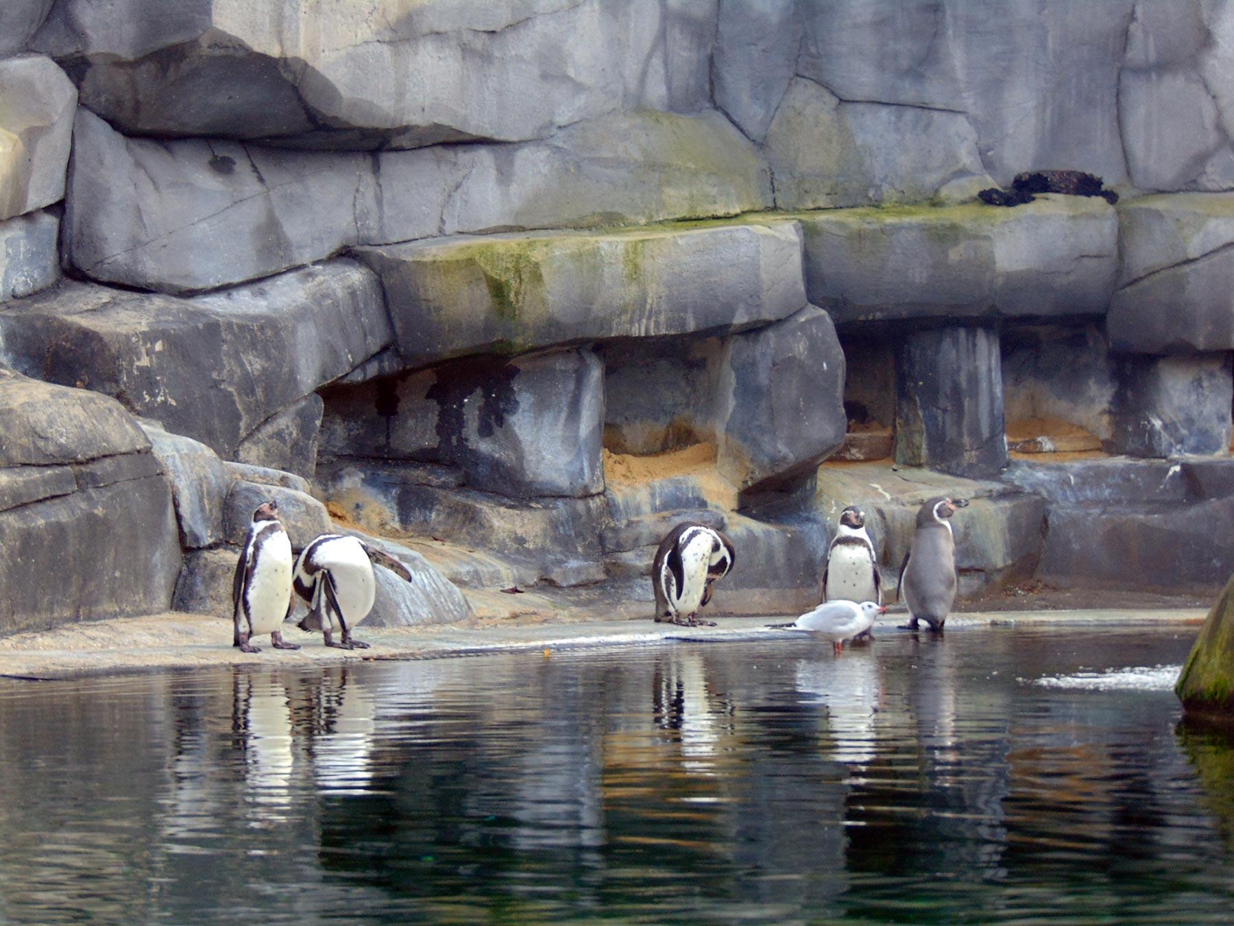 экскурсия в венсенский парижский зоопарк в ноябре