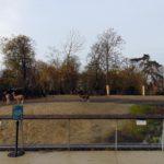 вольеры в парижском зоопарке