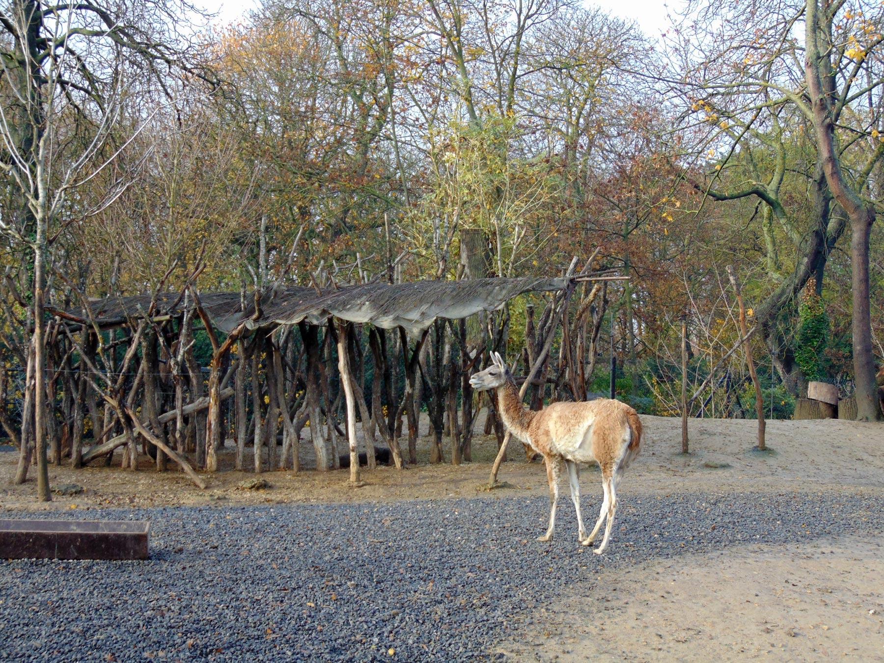 загоны с животными в зоопарке Парижа