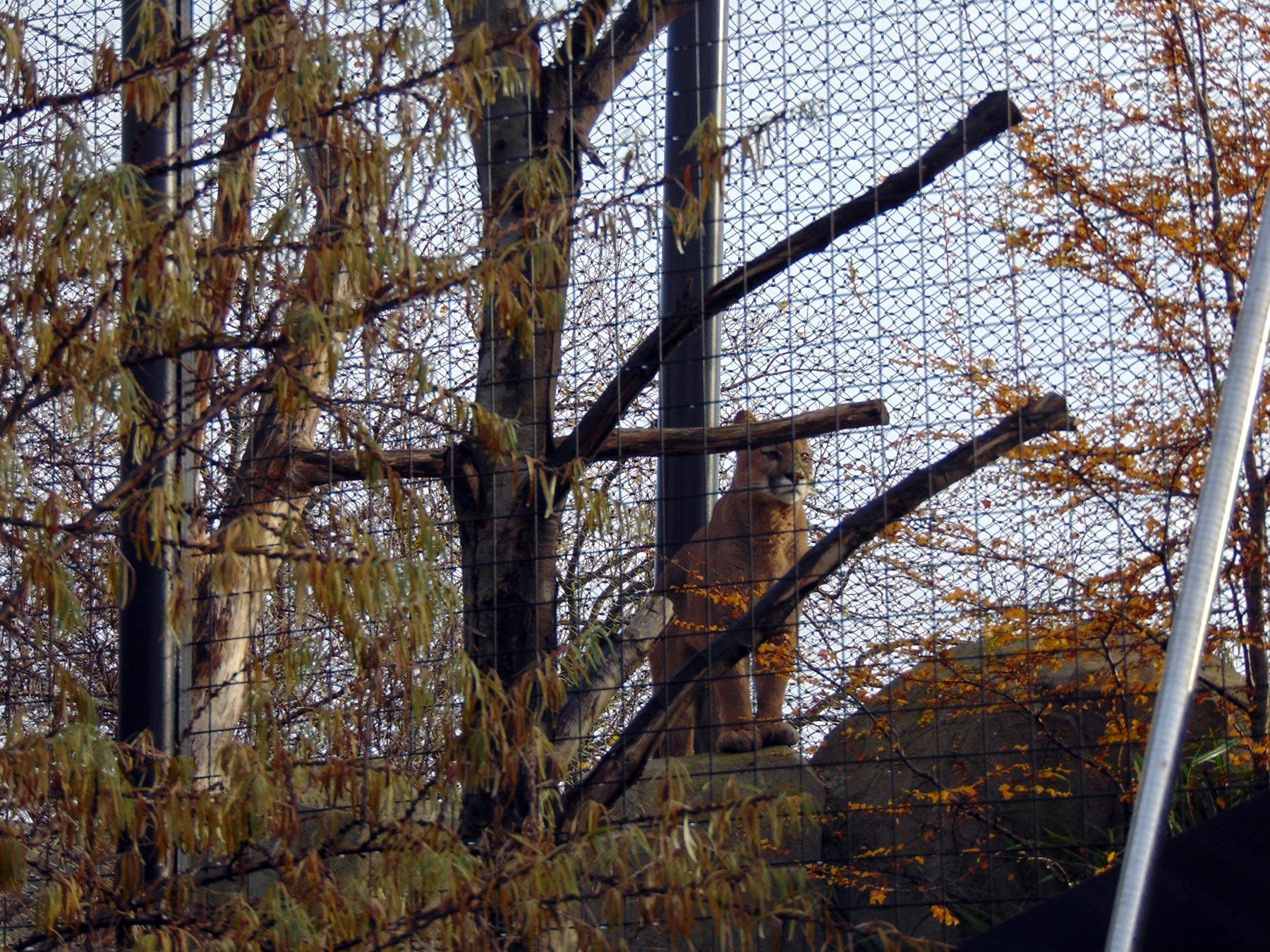 клетки с хищниками венсенского зоопарка в Париже