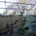 попугаи в парижском зоопарке
