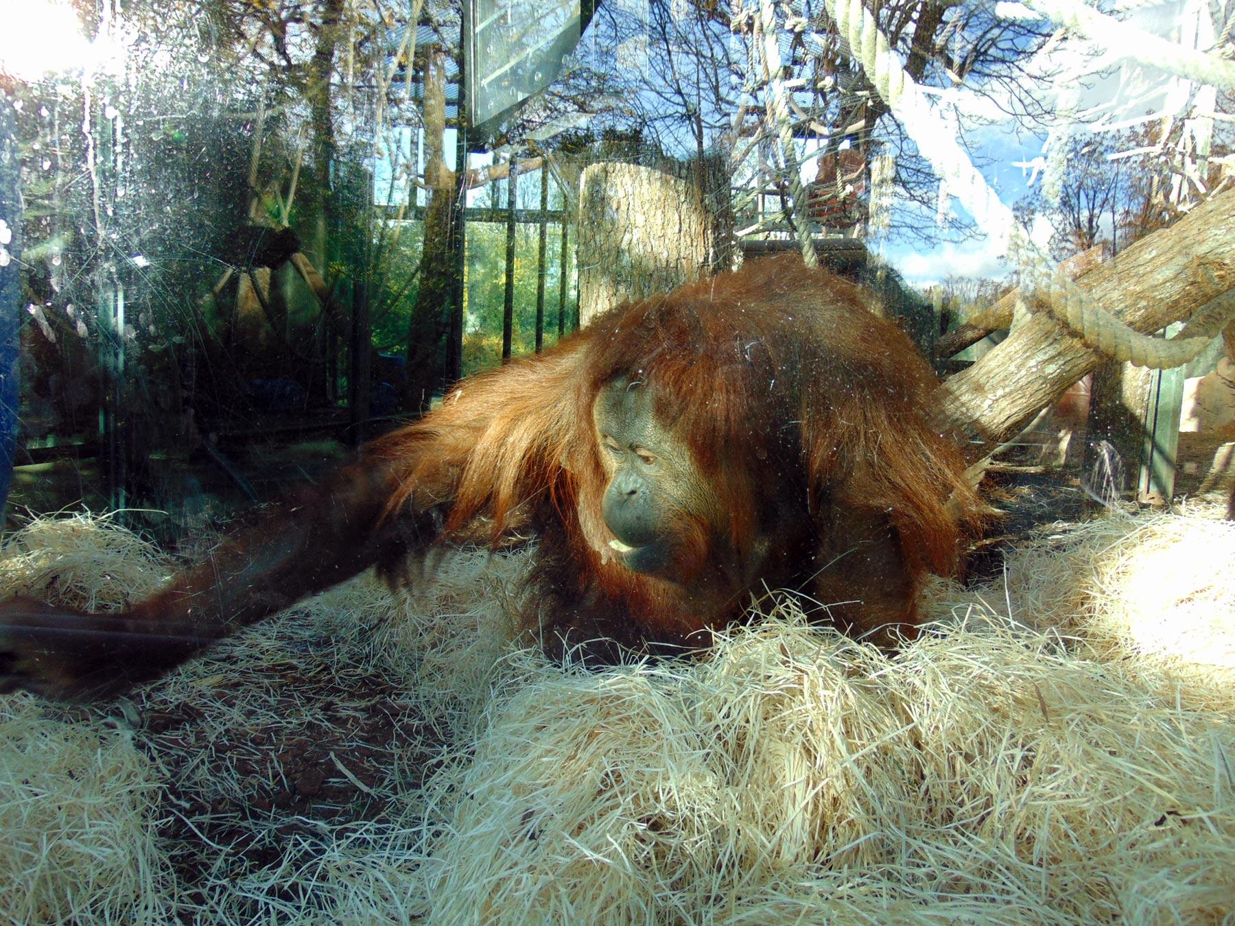 экзотические животные в зоопарке