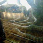 ядовитые змеи в парижском зоопарке