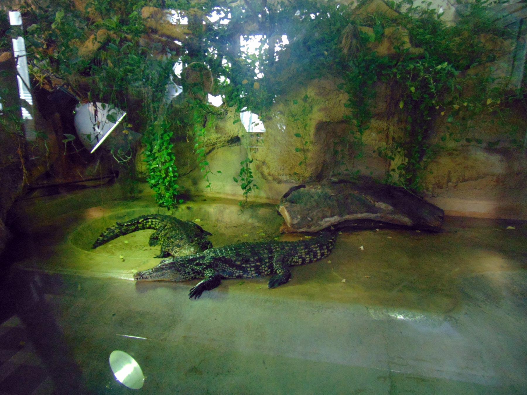 крокодилы в зоопарке при ботаническом саде
