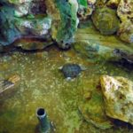 черепахи в вивариуме