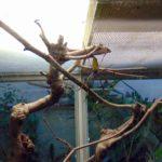 ядовитые пауки в зоопарке