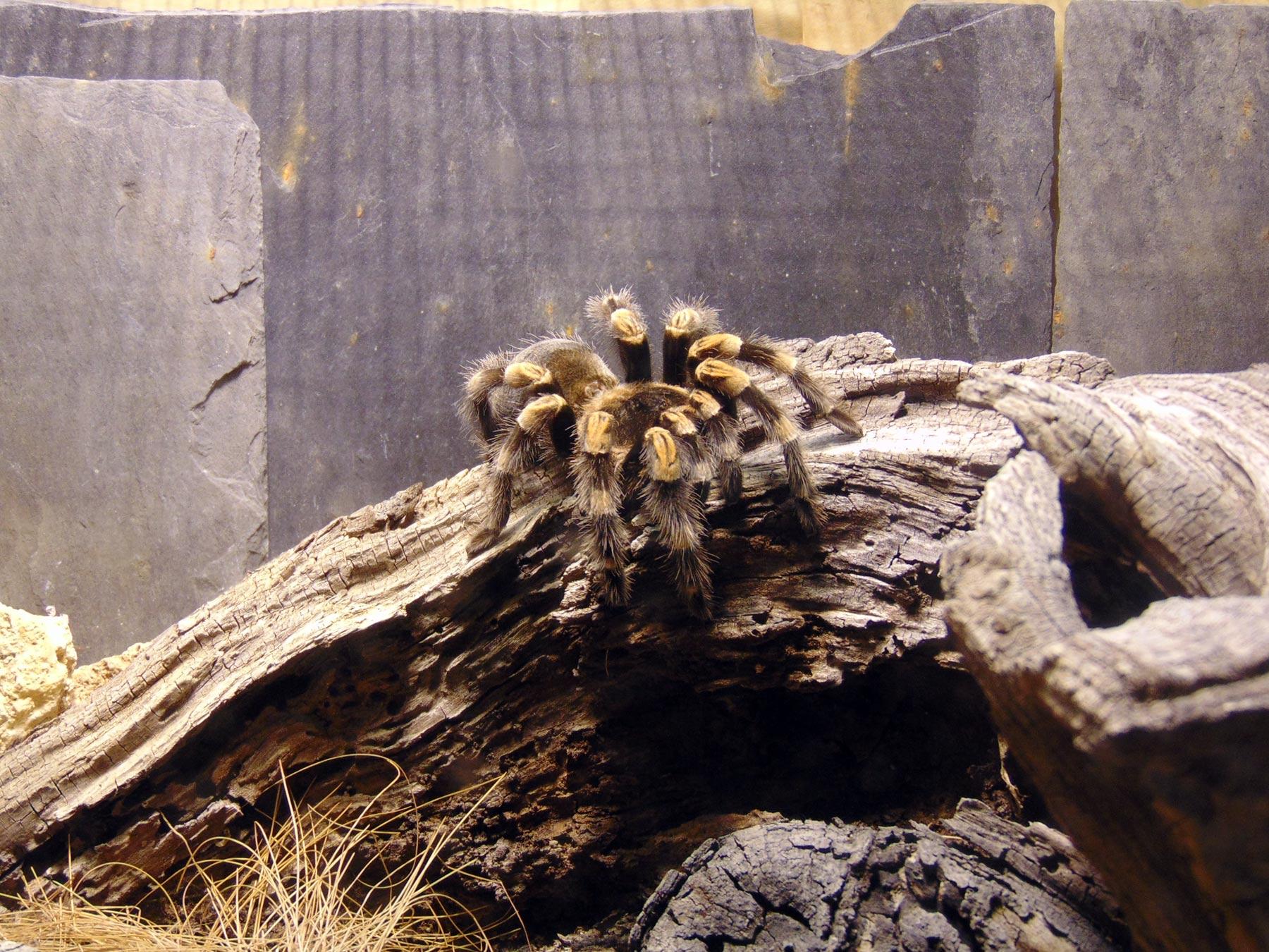 коллекция ядовитых пауков в зоопарке Парижа