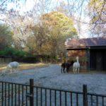 вольеры зоопарка