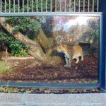 хищники в парижском зоопарке