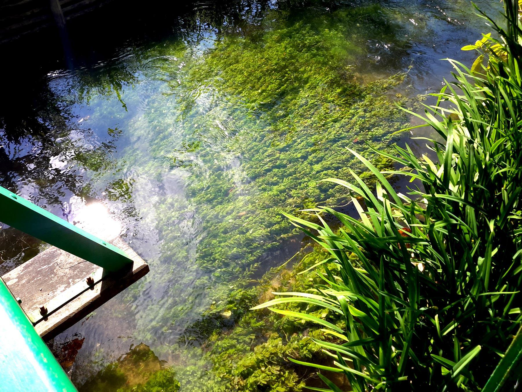 реальный водный сад в Живерни