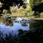 пейзаж пруда Клода Моне