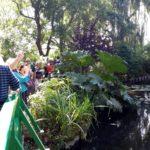неправильный мост Клода Моне