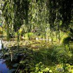Пестрый сад Клода Моне