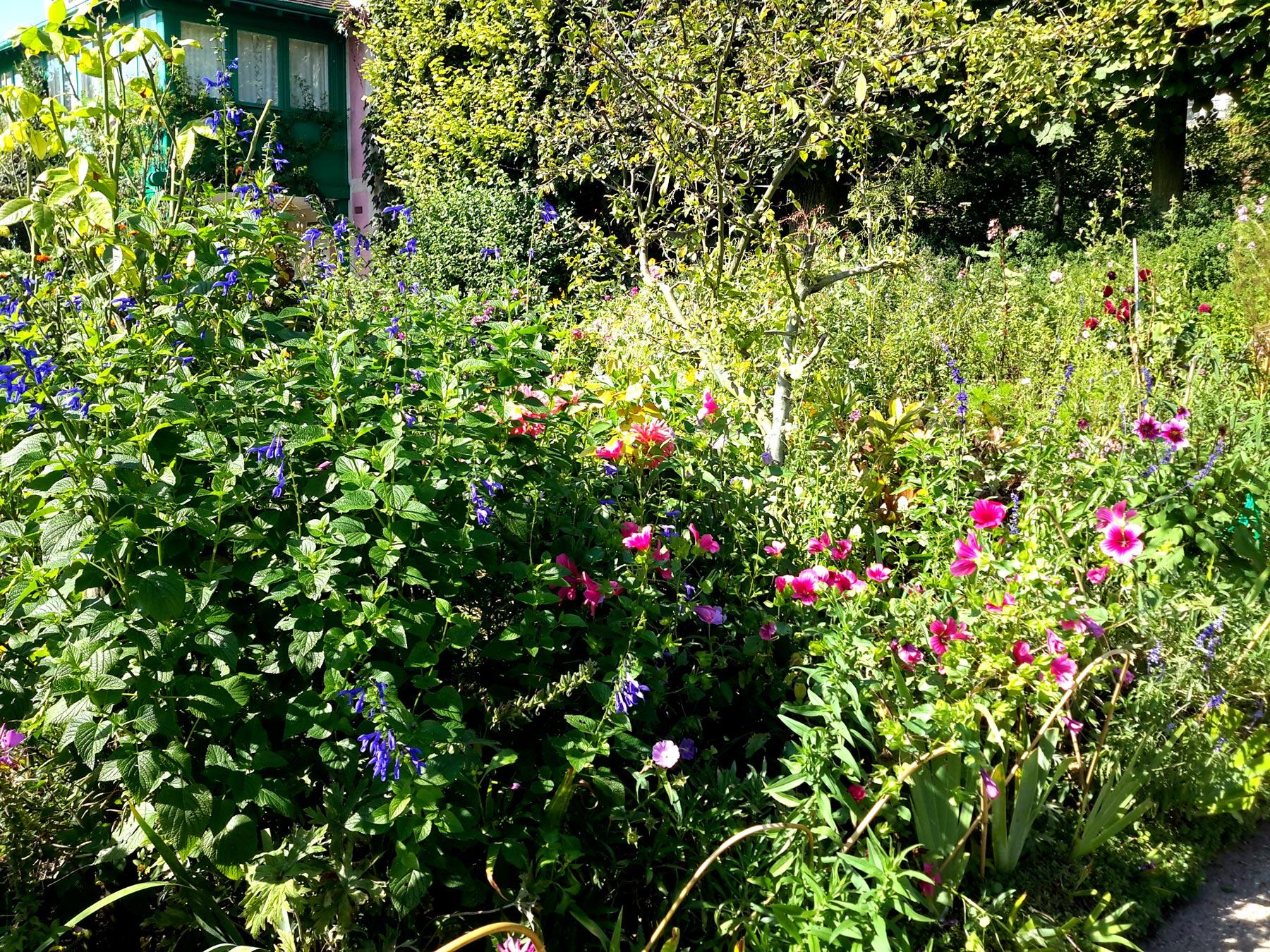 кустарники сада Моне в Живерни