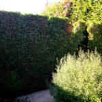 правильные кусты сада Моне