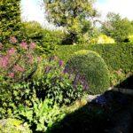 растительность в Саду Живерни