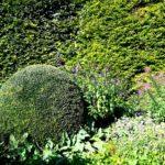 круглые кусты Сада Моне в Живерни