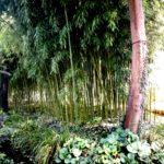 экскурсия в Сад Клода Моне