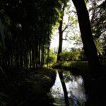 световой Сад Моне
