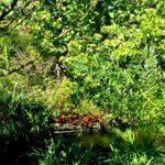 Сад художника в Живерни